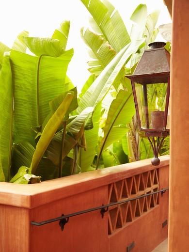Lush foliage and walkway : Stock Photo