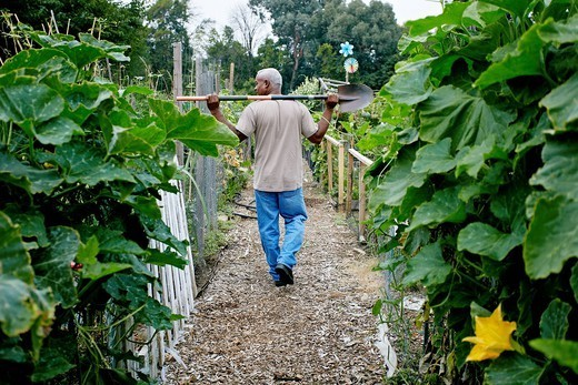 Black man walking with shovel in community garden : Stock Photo
