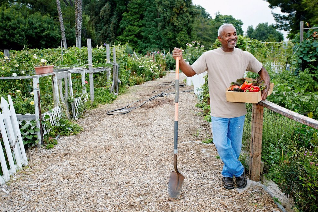 Stock Photo: 1589R-167694 Black man gathering vegetables in community garden