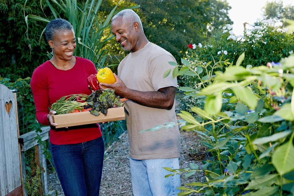 Stock Photo: 1589R-167705 Black couple gathering vegetables in community garden
