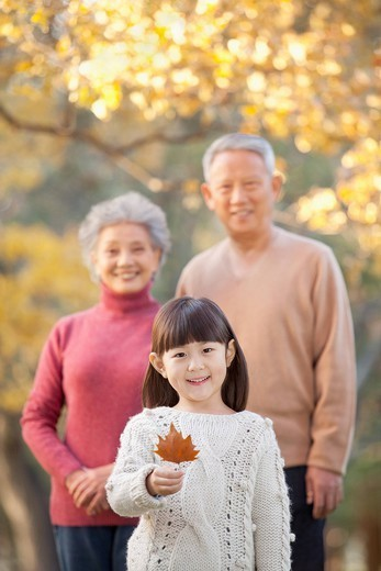 Chinese girl looking at autumn leaf with grandparents : Stock Photo