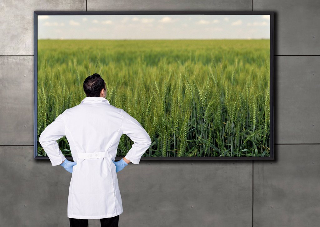 Stock Photo: 1589R-171139 Hispanic scientist looking at agricultural image on television screen