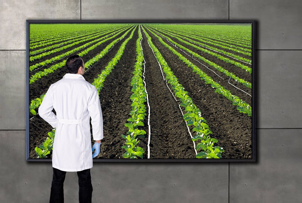 Stock Photo: 1589R-171141 Hispanic scientist looking at agricultural image on television screen