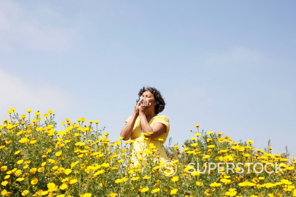 Mixed race woman in field of flowers enjoying scent : Stock Photo