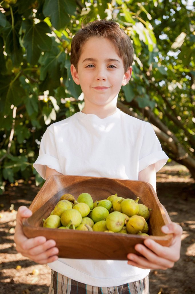 Stock Photo: 1589R-171860 Caucasian boy picking fruit in orchard