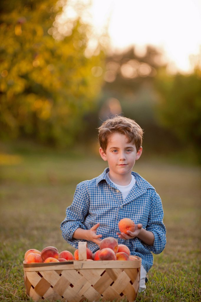 Stock Photo: 1589R-171864 Caucasian boy picking fruit in orchard