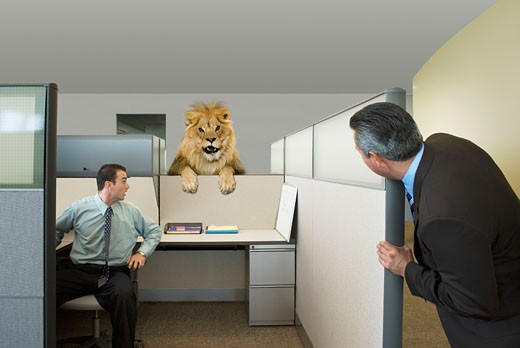 Stock Photo: 1589R-24072 Businessmen looking at lion in office cubicle