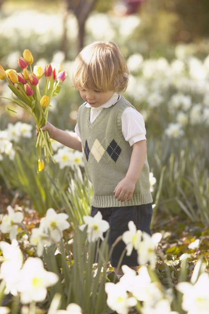 Young boy picking flowers in garden : Stock Photo