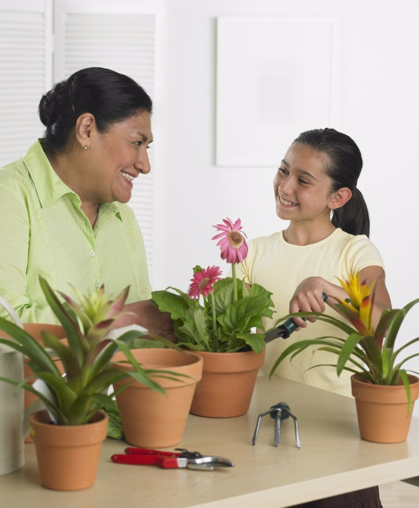 Hispanic grandmother and granddaughter gardening indoors : Stock Photo