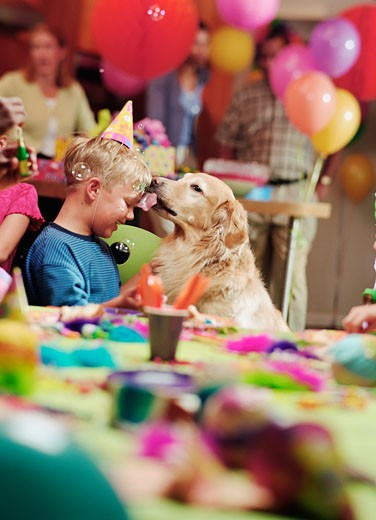 Young boy at birthday party with dog licking his face : Stock Photo