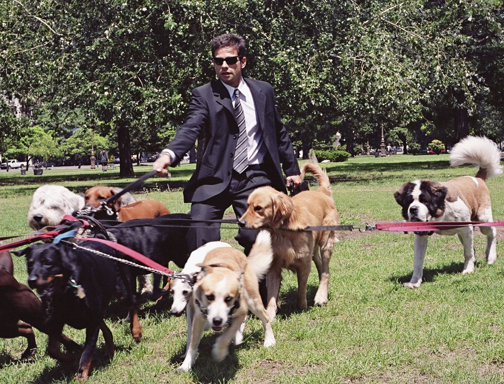 Stock Photo: 1589R-33533 Hispanic businessman walking dogs in park