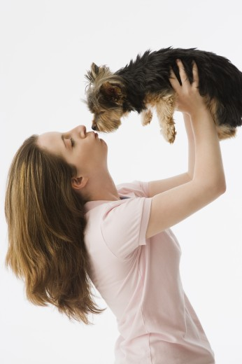 Stock Photo: 1589R-35132 Woman kissing Yorkshire Terrier puppy