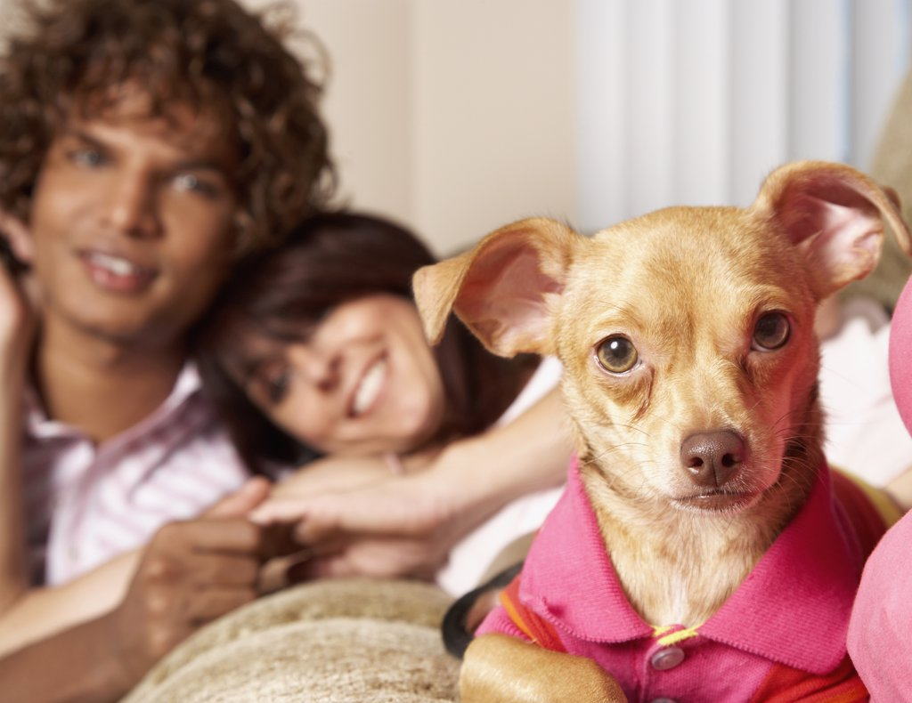 Stock Photo: 1589R-41063 Multi-ethnic couple and small dog