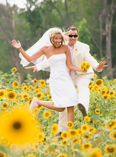 Newlyweds in sunflower patch : Stock Photo