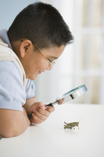 Hispanic boy looking through magnifying glass at grasshopper : Stock Photo