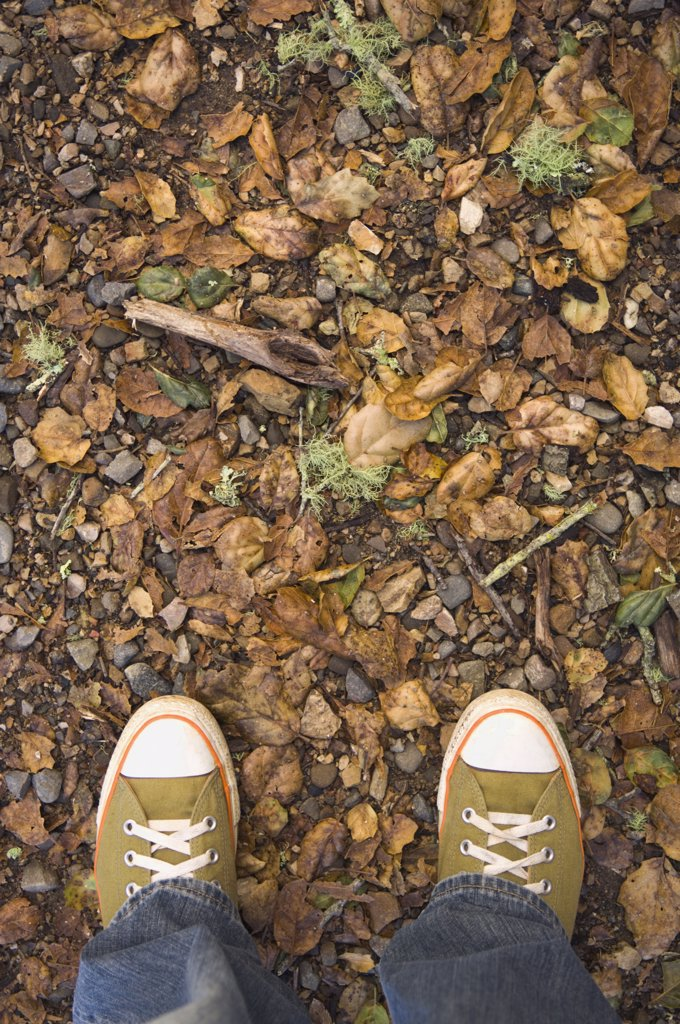 Stock Photo: 1589R-71797 High angle view of sneakers on nature trail