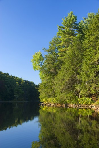 Reflection of trees in water, Bigelow Pond, Bigelow Hollow State Park, Union, Connecticut, USA : Stock Photo