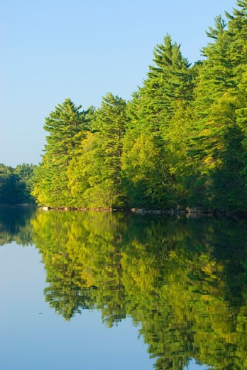 Reflection of trees in water, Mashapaug Pond, Bigelow Hollow State Park, Union, Connecticut, USA : Stock Photo