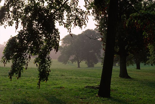 Trees in a lawn, Druid Hill Park, Baltimore, Maryland, USA : Stock Photo
