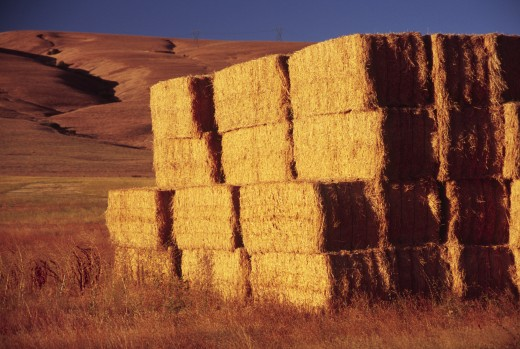 Haystacks in a field, Columbia Hills, Klickitat County, Washington State, USA : Stock Photo