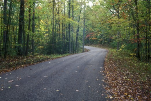 Road passing through a forest, Red River Gorge Geological Area, Daniel Boone National Forest, Kentucky, USA : Stock Photo
