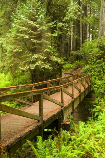 Stock Photo: 1596-1989 Trail bridge with Coast Redwood trees (Sequoia sempervirens) in a forest, James Irvine Trail, Prairie Creek Redwoods State Park, Redwood National Park, California, USA