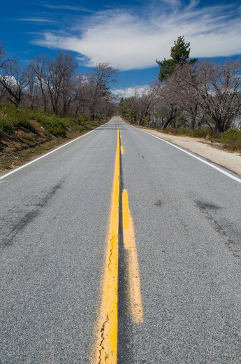 Road passing through a forest, Sunrise Scenic Byway, Laguna Mountain Recreation Area, Cleveland National Forest, California, USA : Stock Photo
