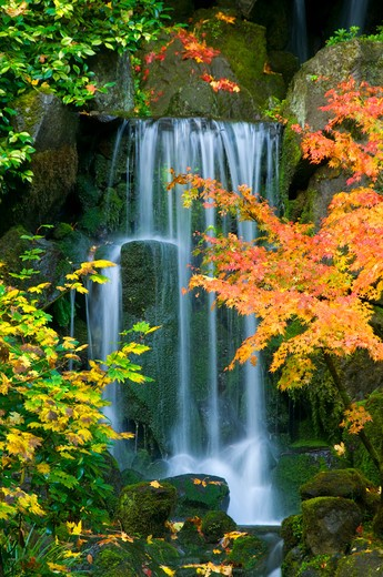 Waterfall in a forest, Heavenly Waterfall, Lower Pond, Portland Japanese Garden, Washington Park, Portland, Oregon, USA : Stock Photo