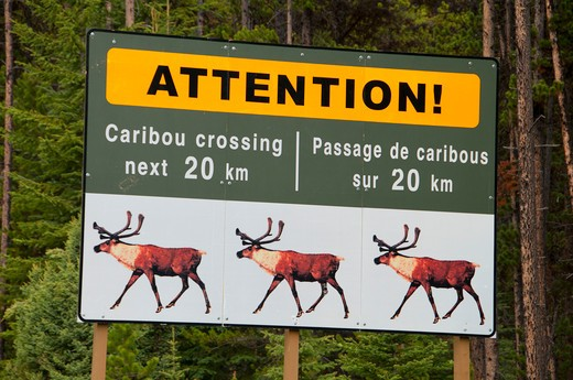 Stock Photo: 1596-2477 Caribou crossing signboard in a forest, Jasper National Park, Alberta, Canada