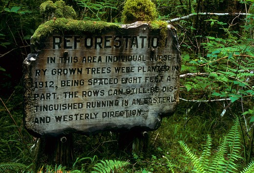 Stock Photo: 1596-2618 Signboard in a forest, Hebo Plantation Trail, Hebo, Siuslaw National Forest, Oregon, USA