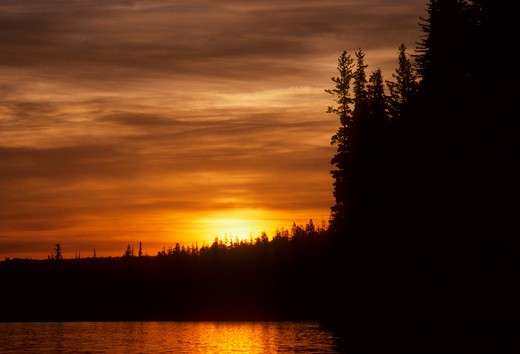 Silhouette of fir trees at sunset, Suttle Lake, Deschutes National Forest, Oregon, USA : Stock Photo