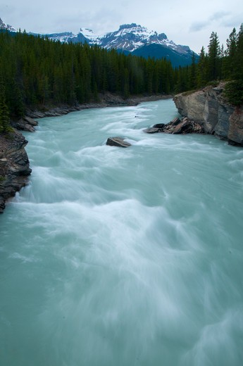 River flowing through forest, North Saskatchewan River, Glacier Lake Trail, Banff National Park, Alberta, Canada : Stock Photo