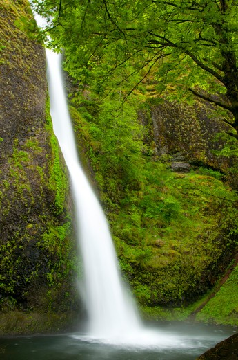 Stock Photo: 1596-2718 Waterfall in a forest, Horsetail Falls, Mt Hood National Forest, Columbia River Gorge National Scenic Area, Oregon, USA