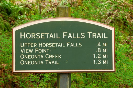 Horsetail Falls Trailhead signboard in a forest, Mt Hood National Forest, Columbia River Gorge National Scenic Area, Oregon, USA : Stock Photo