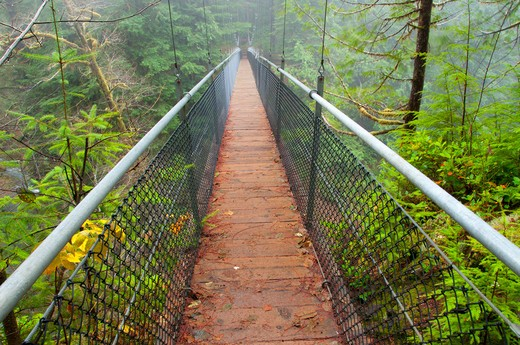 Stock Photo: 1596-2731 Suspension bridge in a forest, Drift Creek Trail, Siuslaw National Forest, Oregon, USA