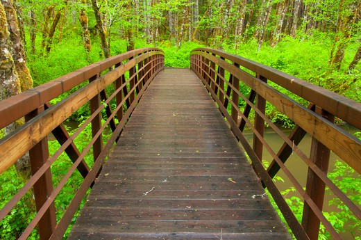 Stock Photo: 1596-2741 Hiker bridge across a river in a forest, Alsea Falls Trail, Alsea Falls Recreation Site, South Fork Alsea River National Back Country Byway, Oregon, USA
