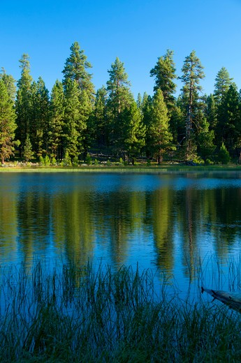 Stock Photo: 1596-2773 Lake in a forest, Delintment Lake, Ochoco National Forest, Burns, Oregon, USA