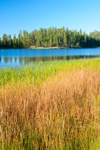 Stock Photo: 1596-2774 Tall grass at the lakeside, Delintment Lake, Ochoco National Forest, Oregon, USA