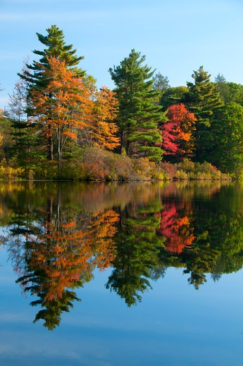 Stock Photo: 1596-2874 USA, Connecticut, Nipmuck State Forest, Morey Pond, Forest in autumn foliage reflected in water