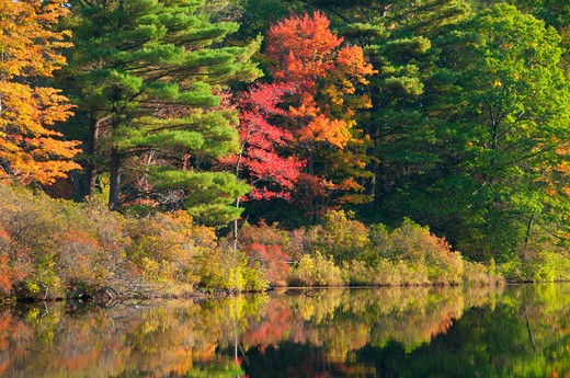 Stock Photo: 1596-2876 USA, Connecticut, Nipmuck State Forest, Morey Pond, Forest in autumn foliage reflected in water