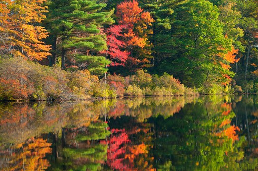 USA, Connecticut, Nipmuck State Forest, Morey Pond, Forest in autumn foliage reflected in water : Stock Photo