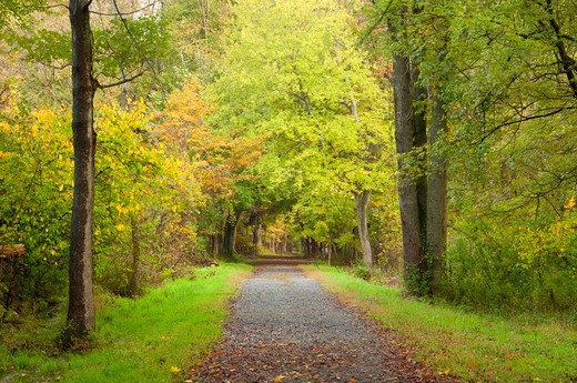 Stock Photo: 1596-2903 USA, Connecticut, Collis P Huntington State Park, Blue Trail, Forest path