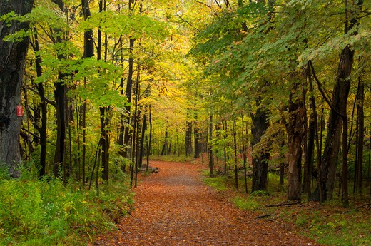 Stock Photo: 1596-2905 USA, Connecticut, Collis P Huntington State Park, Blue Trail, Forest path