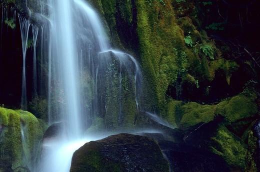 Waterfall in a forest, Breitenbush Cascades, Mt Jefferson Wilderness, Mt Hood National Park, Oregon, USA : Stock Photo
