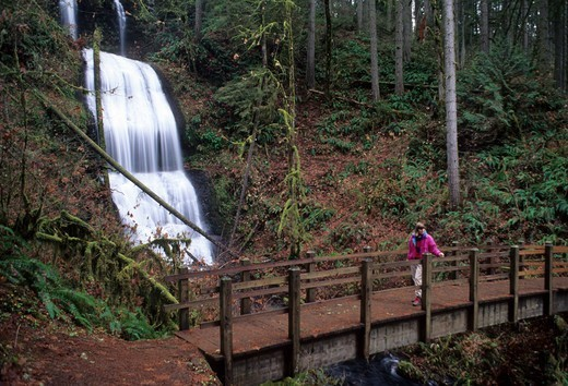 Waterfall in a forest, Royal Terrace Falls, McDowell Creek Falls County Park, Linn County, Oregon, USA : Stock Photo