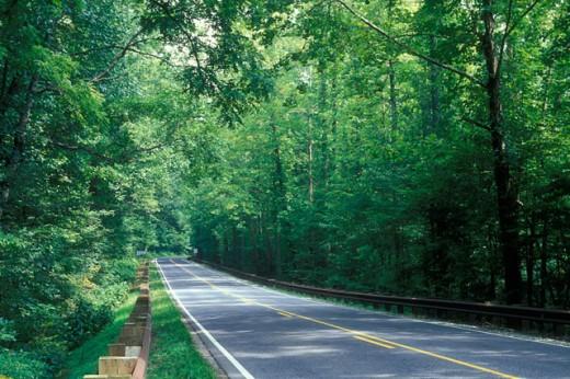 Stock Photo: 1596-318 Trees along a highway, Mountain Waters Scenic Byway, Nantahala National Forest, North Carolina, USA
