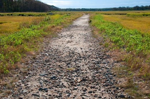 Trail passing through salt water marsh, Barn Island Wildlife Management Area, New London County, Connecticut, USA : Stock Photo