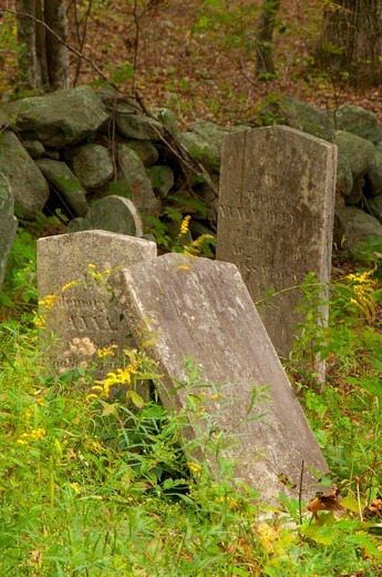 Tombstones in a Cemetery, Barn Island Wildlife Management Area, New London County, Connecticut, USA : Stock Photo