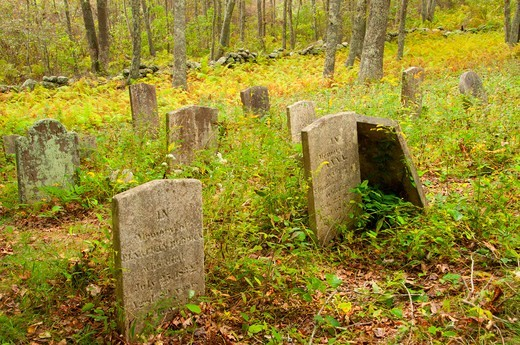 Stock Photo: 1596-3242 Tombstones in a Cemetery, Barn Island Wildlife Management Area, New London County, Connecticut, USA