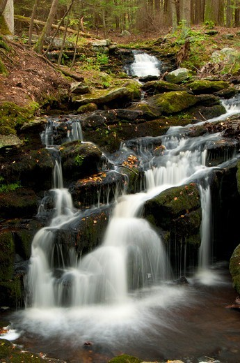 Stock Photo: 1596-3255 Waterfall in a forest, Day Pond Brook Falls, Salmon River State Forest, New London County, Connecticut, USA